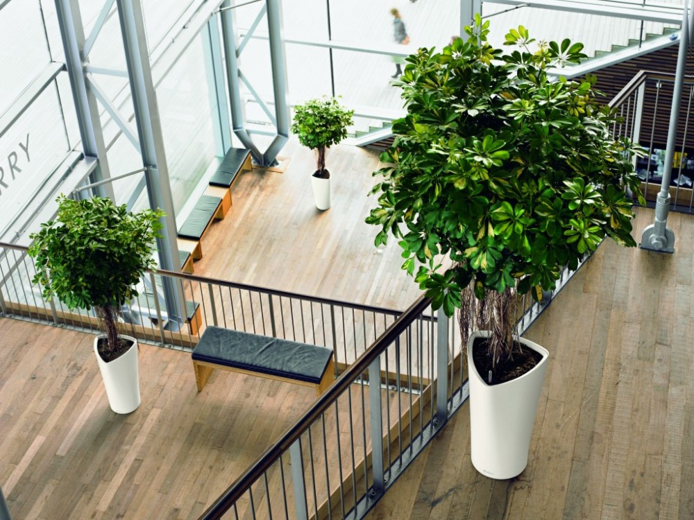 Choosing the Best Indoor Plants for Your Home or Office | Interior ...