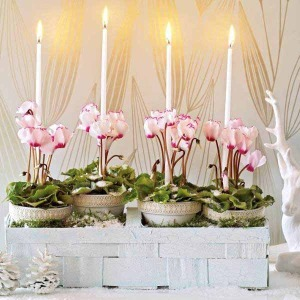 cyclamen-in-white-basket-and-candles--300x300