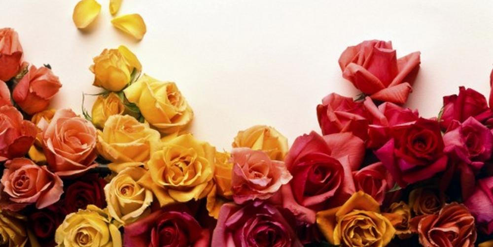 flowers-1000x502