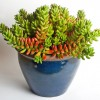 indoor-plant-care