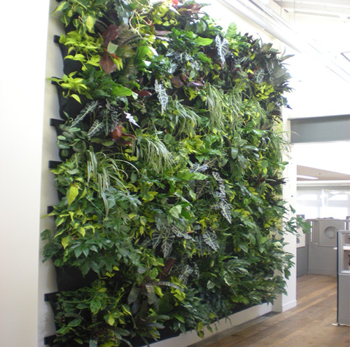 Indoor Wall Plants 500x495