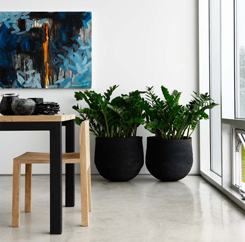 indoor-zamia-potted-plants-500x495
