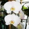 orchids-2-200x300