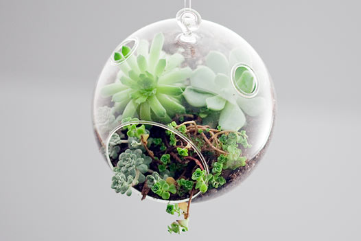 Health and Wellness terrarium