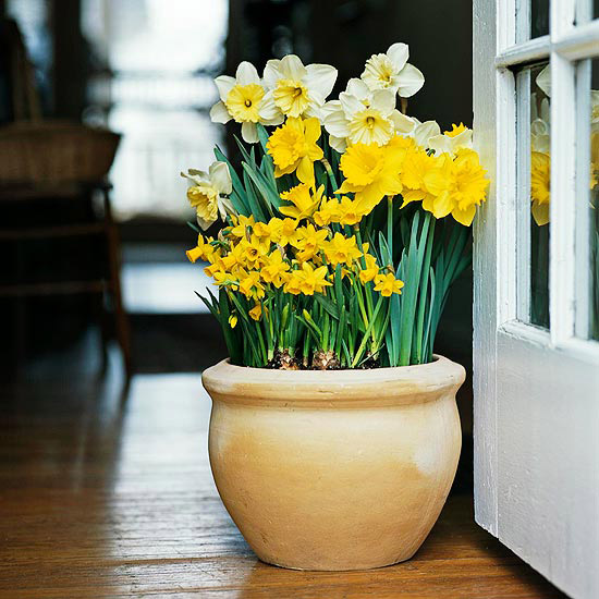 Coax Color And Fragrance Into Your Home With Forced Bulbs Interior Gardens