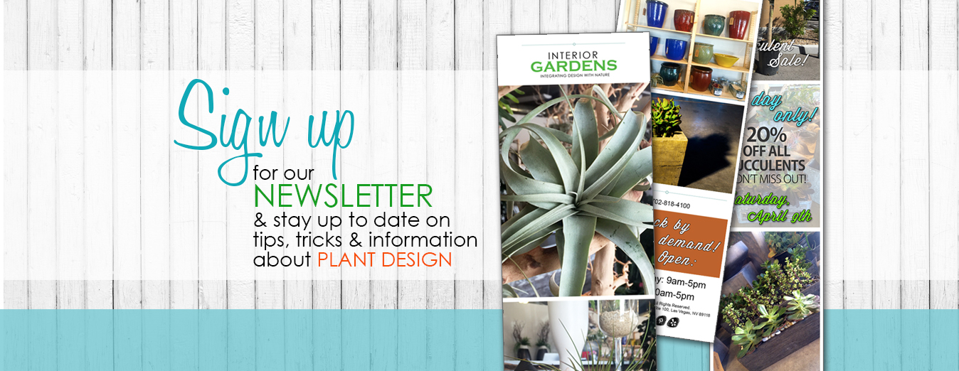 Newsletter_5_16