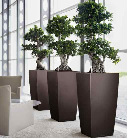 Attractive What To Expect From A Professional Indoor Plant Design Service Design Inspirations