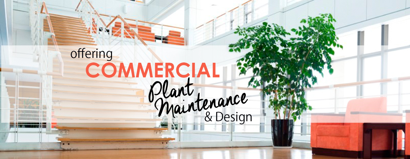 CommercialPlantMaintenance